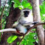 Jungleøens beboere poserer