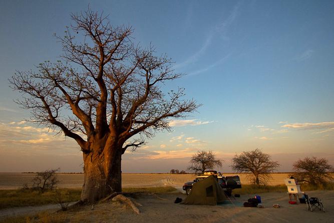 Baines baobab I