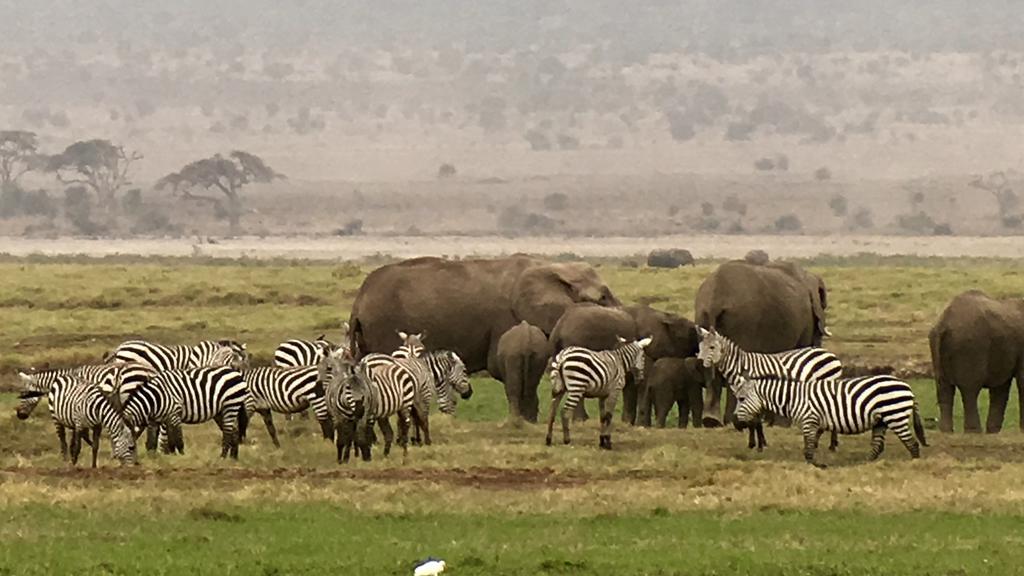 Flokke af dyr på Ambosellis sletter